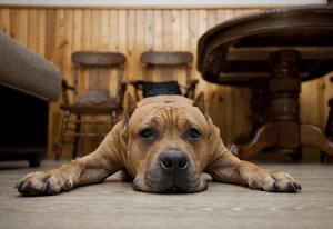 dog enjoying underfloor heating